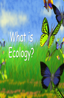 Introduction to Ecology Lecture PPT