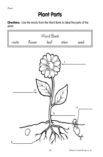 Plants And Their Parts - Lessons - Tes Teach